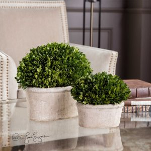 Boxwood Domes (set Of 2)